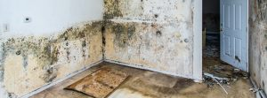 mold removal, mold remediation, mold cleanup, mold inspection